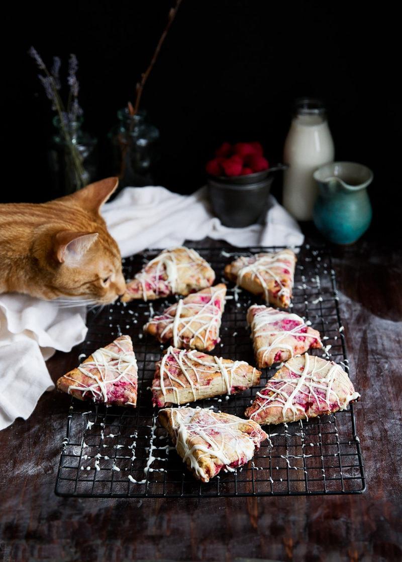 cat sniffing White Chocolate Raspberry Rhubarb Scones